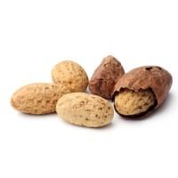 可乐豆Kola Nut